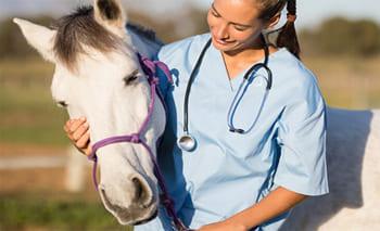 Ветеринарное сопровождение лошадей в Московской области, прокат лошадей в Подмосковье, обучение верховой езде в Подмосковье, покататься на лошадях в Подмосковье;