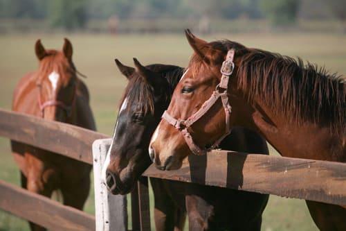 постой лошадей в Московской области, прокат лошадей в Подмосковье, обучение верховой езде в Подмосковье, покататься на лошадях в Подмосковье