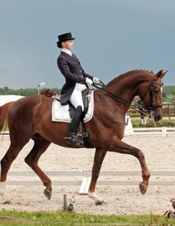 Бушина Лариса, обучение верховой езде в Подмосковье, покататься на лошадях в Подмосковье;