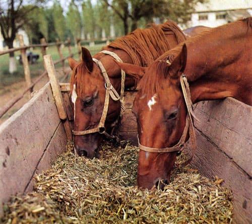 питание лошадей, постой лошадей в Московской области, аренда денников для лошадей, прокат лошадей в Подмосковье, уроки верховой езды, обучение верховой езде в Подмосковье, покататься на лошадях в Подмосковье, конные прогулки, прогулки на лошадях