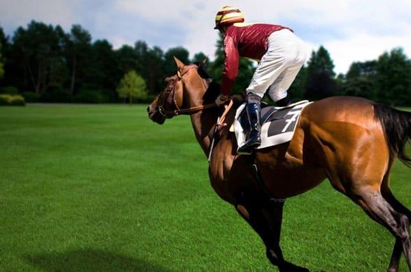 конный спорт, обучение верховой езде, уроки верховой езды, постой лошадей в Московской области, прокат лошадей в Подмосковье, уроки верховой езды, обучение верховой езде в Подмосковье, покататься на лошадях в Подмосковье