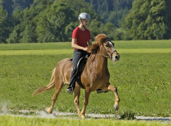 обучение верховой езде, уроки верховой езды, постой лошадей в Московской области, прокат лошадей в Подмосковье, уроки верховой езды, обучение верховой езде в Подмосковье, покататься на лошадях в Подмосковье