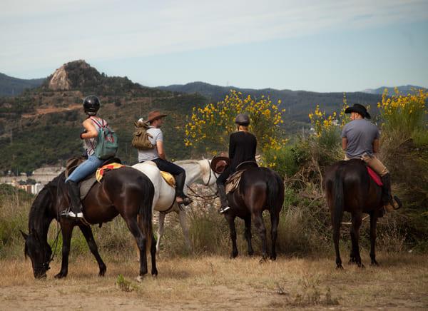 конные прогулки в Подмосковье, постой лошадей в Московской области, аренда денников для лошадей, прокат лошадей в Подмосковье, уроки верховой езды, обучение верховой езде в Подмосковье, покататься на лошадях в Подмосковье, конные прогулки, прогулки на лошадях