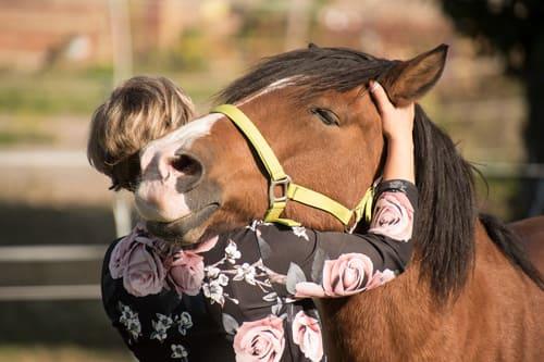 выбрать лошадь, конные прогулки в Подмосковье, постой лошадей в Московской области, аренда денников для лошадей, прокат лошадей в Подмосковье, уроки верховой езды, обучение верховой езде в Подмосковье, покататься на лошадях в Подмосковье, конные прогулки, прогулки на лошадях
