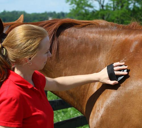Уход за шерстью лошади, постой лошадей в Московской области, аренда денников для лошадей, прокат лошадей в Подмосковье, уроки верховой езды, обучение верховой езде в Подмосковье, покататься на лошадях в Подмосковье, конные прогулки, прогулки на лошадях