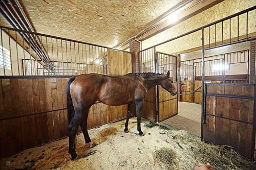 стойло для лошади, постой лошадей в Подмосковье, конюшня, аренда денников для лошадей, прокат лошадей в Подмосковье, уроки верховой езды, обучение верховой езде в Подмосковье, покататься на лошадях в Подмосковье, конные прогулки, прогулки на лошадях