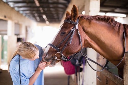 ветеринарный осмотр, постой лошадей в Подмосковье, конюшня, аренда денников для лошадей, прокат лошадей в Подмосковье, уроки верховой езды, обучение верховой езде в Подмосковье, покататься на лошадях в Подмосковье, конные прогулки, прогулки на лошадях