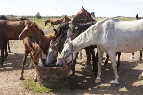 напоить лошадь, постой лошадей в Подмосковье, конюшня, аренда денников для лошадей, прокат лошадей в Подмосковье, уроки верховой езды, обучение верховой езде в Подмосковье, покататься на лошадях в Подмосковье, конные прогулки, прогулки на лошадях