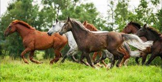 разведение лошадей, постой лошадей в Подмосковье, конюшня, аренда денников для лошадей, прокат лошадей в Подмосковье, уроки верховой езды, обучение верховой езде в Подмосковье, покататься на лошадях в Подмосковье, конные прогулки, прогулки на лошадях