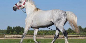 напоить лошадь, постой лошадей в Подмосковье, конюшня, аренда денников для лошадей, прокат лошадей в Подмосковье, уроки верховой езды, обучение верховой езде в Подмосковье, покататься на лошадях в Подмосковье, конные прогулки, прогулки на лошадях;