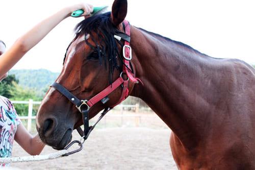 уход за лошадью, постой лошадей в Подмосковье, конюшня, аренда денников для лошадей, прокат лошадей в Подмосковье, уроки верховой езды, обучение верховой езде в Подмосковье, покататься на лошадях в Подмосковье, конные прогулки, прогулки на лошадях