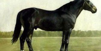 кузнецкая лошадь, постой лошадей в Подмосковье, конюшня, аренда денников для лошадей, прокат лошадей в Подмосковье, уроки верховой езды, обучение верховой езде в Подмосковье, покататься на лошадях в Подмосковье, конные прогулки, прогулки на лошадях