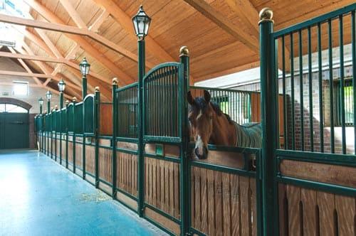 конюшня, денник для лошади, постой лошадей в Подмосковье, конюшня, аренда денников для лошадей, прокат лошадей в Подмосковье, уроки верховой езды, обучение верховой езде в Подмосковье, покататься на лошадях в Подмосковье, конные прогулки, прогулки на лошадях