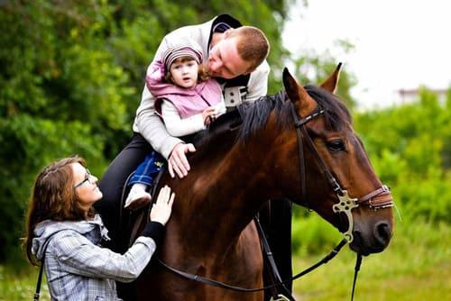 знакомство с лошадью, постой лошадей в Подмосковье, конюшня, аренда денников для лошадей, прокат лошадей в Подмосковье, уроки верховой езды, обучение верховой езде в Подмосковье, покататься на лошадях в Подмосковье, конные прогулки, прогулки на лошадях