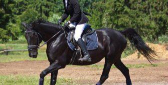 обучение верховой езде, постой лошадей в Подмосковье, конюшня, аренда денников для лошадей, прокат лошадей в Подмосковье, уроки верховой езды, обучение верховой езде в Подмосковье, покататься на лошадях в Подмосковье, конные прогулки, прогулки на лошадях