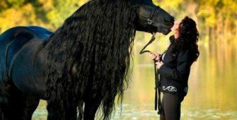 купить лошадь, постой лошадей в Подмосковье, конюшня, аренда денников для лошадей, прокат лошадей в Подмосковье, уроки верховой езды, обучение верховой езде в Подмосковье, покататься на лошадях в Подмосковье, конные прогулки, прогулки на лошадях