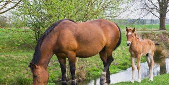 Стоимость и содержание лошадей, постой лошадей в Подмосковье, конюшня, аренда денников для лошадей, прокат лошадей в Подмосковье, уроки верховой езды, обучение верховой езде в Подмосковье, покататься на лошадях в Подмосковье, конные прогулки, прогулки на лошадях