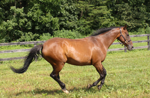 как подобрать имя для лошади, постой для лошадей в Подмосковье, конюшня, аренда денников для лошадей, прокат лошадей в Подмосковье, уроки верховой езды, обучение верховой езде в Подмосковье, покататься на лошадях в Подмосковье, конные прогулки, прогулки на лошадях