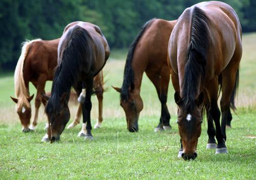 кормление и содержание лошадей, постой лошадей в Московской области, прокат лошадей в Подмосковье, уроки верховой езды, обучение верховой езде в Подмосковье, покататься на лошадях в Подмосковье, конные прогулки
