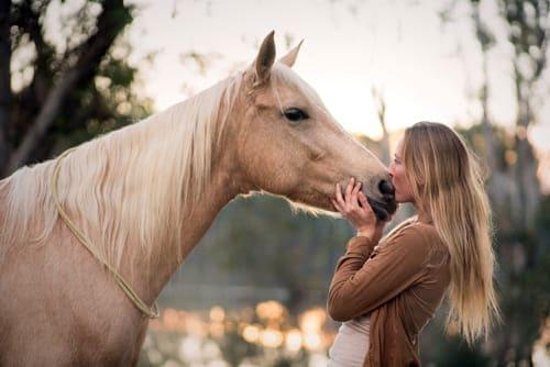 Почему мы любим лошадей, постой лошадей в Подмосковье, конюшня, аренда денников для лошадей, прокат лошадей в Подмосковье, уроки верховой езды, обучение верховой езде в Подмосковье, покататься на лошадях в Подмосковье, конные прогулки, прогулки на лошадях
