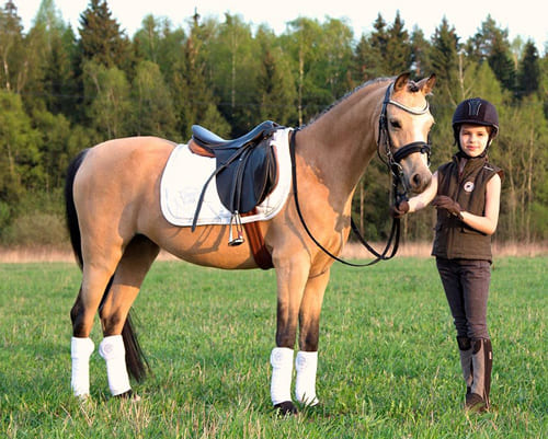 выбрать для себя лошадь, постой лошадей в Московской области, аренда денников для лошадей, прокат лошадей в Подмосковье, уроки верховой езды, обучение верховой езде в Подмосковье, покататься на лошадях в Подмосковье, конные прогулки, прогулка на лошадях