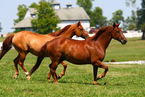 покупка лошади, постой для лошадей в Подмосковье, конюшня, аренда денников для лошадей, прокат лошадей в Подмосковье, уроки верховой езды, обучение верховой езде в Подмосковье, покататься на лошадях в Подмосковье, конные прогулки, прогулки на лошадях