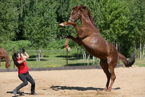 стресс лошади, постой для лошадей в Подмосковье, конюшня, аренда денников для лошадей, прокат лошадей в Подмосковье, уроки верховой езды, обучение верховой езде в Подмосковье, покататься на лошадях в Подмосковье, конные прогулки, прогулки на лошадях