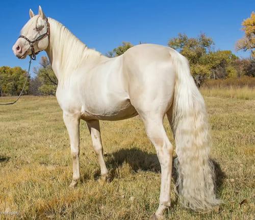 Терская порода лошадей, постой для лошадей в Подмосковье, конюшня, аренда денников для лошадей, прокат лошадей в Подмосковье, уроки верховой езды, обучение верховой езде в Подмосковье, покататься на лошадях в Подмосковье, конные прогулки, прогулки на лошадях