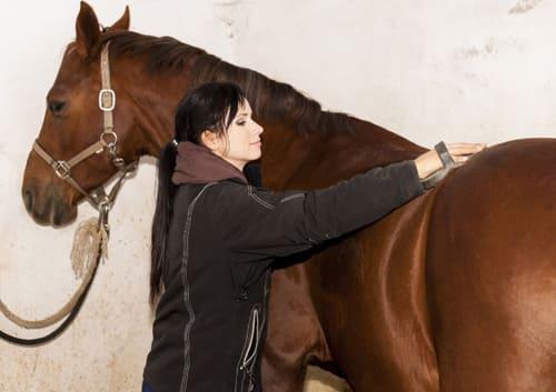 воспитание и содержание лошадей, постой лошадей в Московской области, аренда денников для лошадей, прокат лошадей в Подмосковье, уроки верховой езды, обучение верховой езде в Подмосковье, покататься на лошадях в Подмосковье, конные прогулки, прогулки на лошадях