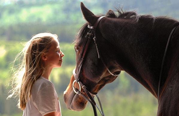 иппотерапия, постой лошадей в Московской области, аренда денников для лошадей, прокат лошадей в Подмосковье, уроки верховой езды, обучение верховой езде в Подмосковье, покататься на лошадях в Подмосковье, конные прогулки, прогулки на лошадях;