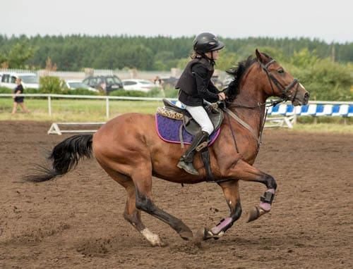 тренер для лошади, постой для лошадей в Подмосковье, конюшня, аренда денников для лошадей, прокат лошадей в Подмосковье, уроки верховой езды, обучение верховой езде в Подмосковье, покататься на лошадях в Подмосковье, конные прогулки, прогулки на лошадях