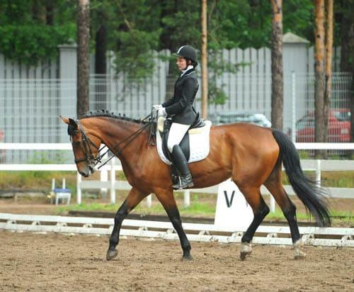 обучение верховой езде, постой для лошадей в Подмосковье, конюшня, аренда денников для лошадей, прокат лошадей в Подмосковье, уроки верховой езды, обучение верховой езде в Подмосковье, покататься на лошадях в Подмосковье, конные прогулки, прогулки на лошадях