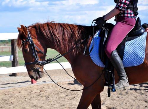 полезные навыки для владельцев лошадей, постой для лошадей в Подмосковье, конюшня, аренда денников для лошадей, прокат лошадей в Подмосковье, уроки верховой езды, обучение верховой езде в Подмосковье, покататься на лошадях в Подмосковье, конные прогулки, прогулки на лошадях