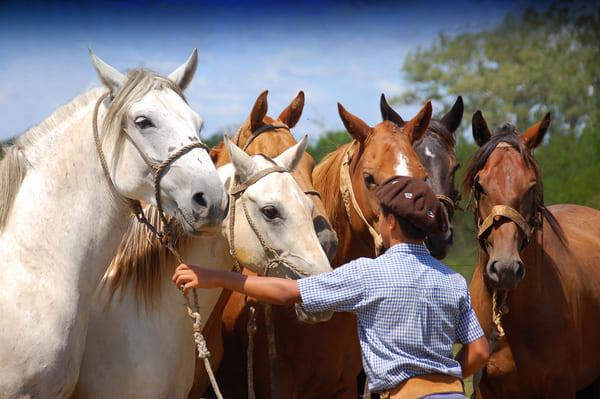 постой лошадей в Московской области, аренда денников для лошадей, прокат лошадей в Подмосковье, уроки верховой езды, обучение верховой езде в Подмосковье, покататься на лошадях в Подмосковье, конные прогулки, прогулки на лошадях