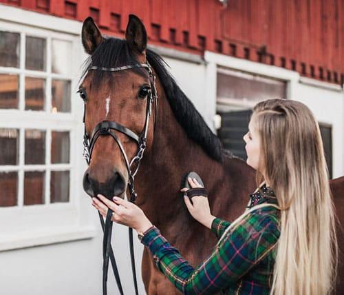 завести лошадь, постой для лошадей в Подмосковье, конюшня, аренда денников для лошадей, прокат лошадей в Подмосковье, уроки верховой езды, обучение верховой езде в Подмосковье, покататься на лошадях в Подмосковье, конные прогулки, прогулки на лошадях