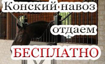 конский навоз, постой лошадей в Московской области, прокат лошадей в Подмосковье, обучение верховой езде в Подмосковье, покататься на лошадях в Подмосковье