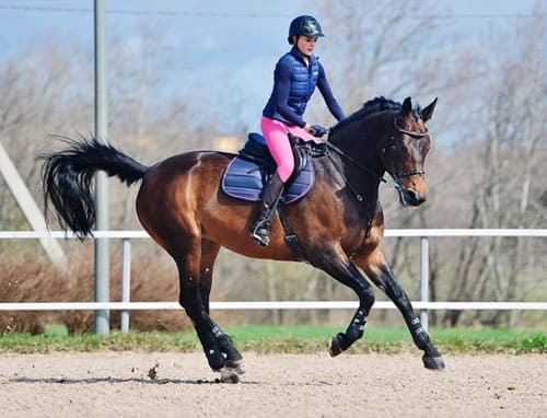 обучение верховой езде в Подмосковье, постой для лошадей в Подмосковье, конюшня, аренда денников для лошадей, прокат лошадей в Подмосковье, уроки верховой езды, покататься на лошадях в Подмосковье, конные прогулки, прогулки на лошадях