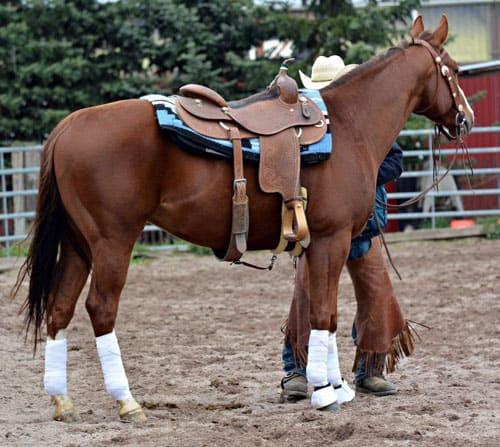 приучить лошадь к седлу, постой для лошадей в Подмосковье, конюшня, аренда денников для лошадей, прокат лошадей в Подмосковье, уроки верховой езды, обучение верховой езде в Подмосковье, покататься на лошадях в Подмосковье, конные прогулки, прогулки на лошадях