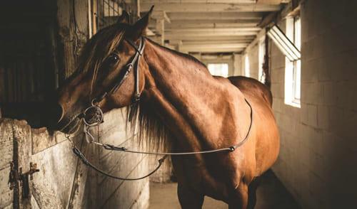 постой лошадей в Подмосковье, конюшня, аренда денников для лошадей, прокат лошадей в Подмосковье, уроки верховой езды, обучение верховой езде в Подмосковье, покататься на лошадях в Подмосковье, конные прогулки, прогулки на лошадях