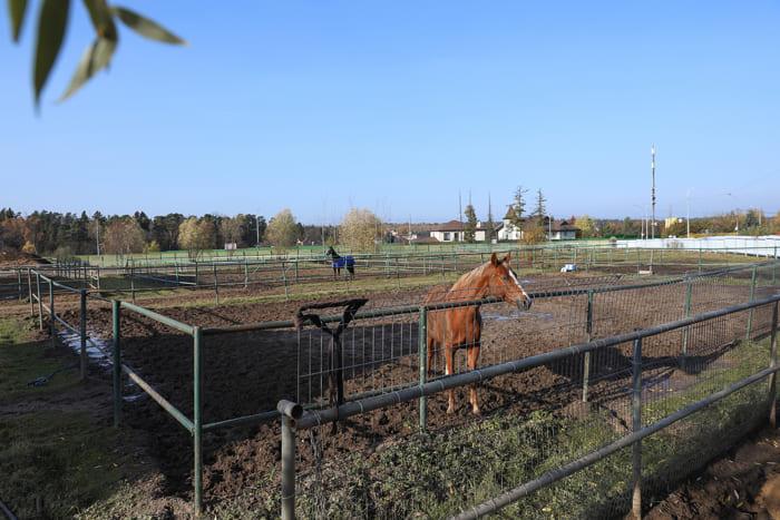 кск Алин Мак в Подушкино, постой лошадей в Подмосковье
