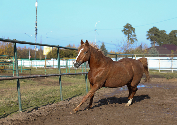 кск Алин Мак в Подушкино, постой лошадей в Подмосковье;