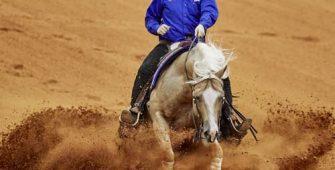 рейнинг, постой для лошадей в Подмосковье, конюшня, аренда денников для лошадей, прокат лошадей в Подмосковье, уроки верховой езды, покататься на лошадях в Подмосковье, конные прогулки, прогулки на лошадях