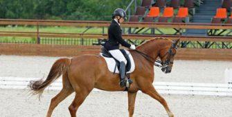 Правила соревнований по выездке, постой для лошадей в Подмосковье, конюшня, аренда денников для лошадей, прокат лошадей в Подмосковье, уроки верховой езды, покататься на лошадях в Подмосковье, конные прогулки, прогулки на лошадях