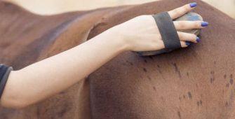 уход за лошадью, чистка шерсти, постой для лошадей в Подмосковье, конюшня, аренда денников для лошадей, прокат лошадей в Подмосковье, уроки верховой езды, покататься на лошадях в Подмосковье, конные прогулки, прогулки на лошадях