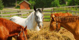 как правильно кормить лошадь, постой для лошадей в Подмосковье, конюшня, аренда денников для лошадей, прокат лошадей в Подмосковье, уроки верховой езды, покататься на лошадях в Подмосковье, конные прогулки, прогулки на лошадях