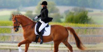 основы верховой езды на лошади, постой для лошадей в Подмосковье, конюшня, аренда денников для лошадей, прокат лошадей в Подмосковье, уроки верховой езды, покататься на лошадях в Подмосковье, конные прогулки, прогулки на лошадях
