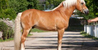 масти лошадей, постой для лошадей в Подмосковье, конюшня, аренда денников для лошадей, прокат лошадей в Подмосковье, уроки верховой езды, покататься на лошадях в Подмосковье, конные прогулки, прогулки на лошадях