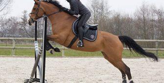 верховая езда для детей, экипировка, постой для лошадей в Подмосковье, конюшня, аренда денников для лошадей, прокат лошадей в Подмосковье, уроки верховой езды, покататься на лошадях в Подмосковье, конные прогулки, прогулки на лошадях