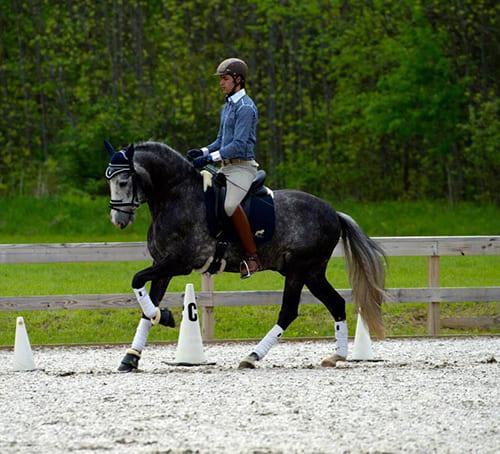 правильная посадка в седле, постой для лошадей в Подмосковье, конюшня, аренда денников для лошадей, прокат лошадей в Подмосковье, уроки верховой езды, покататься на лошадях в Подмосковье, конные прогулки, прогулки на лошадях