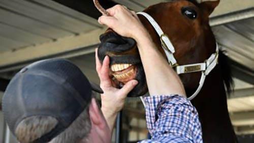 уход за зубами лошади, постой для лошадей в Подмосковье, конюшня, аренда денников для лошадей, прокат лошадей в Подмосковье, уроки верховой езды, покататься на лошадях в Подмосковье, конные прогулки, прогулки на лошадях